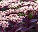 Flori la ghiveci toamna-iarna