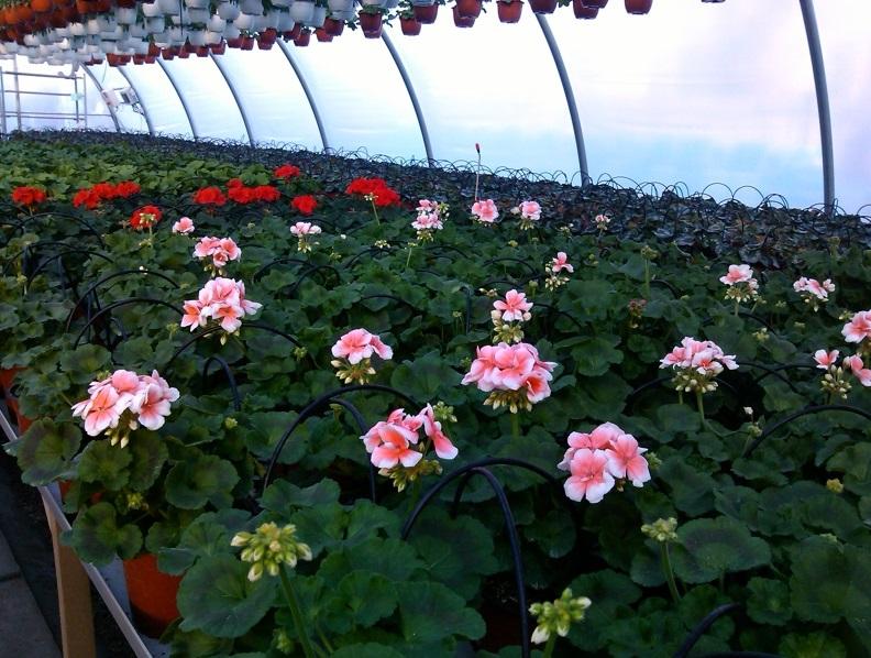 Flori parcuri
