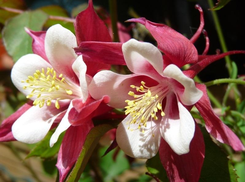 Flori bienale