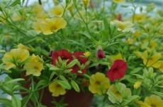 Plante pentru borduri