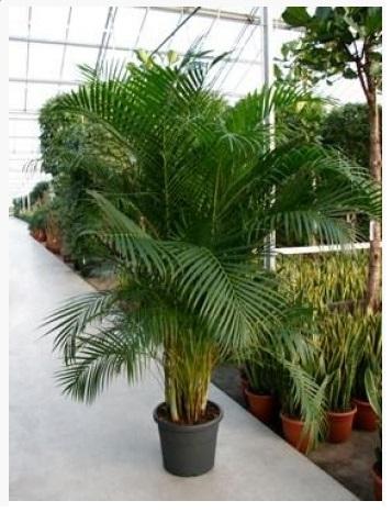 Plante decorative de interior plante decorative de interior for Plante decorative