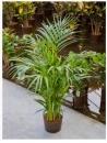 Plante decorative de interior