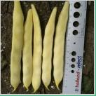 Seminte de fasole