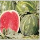 Seminte de pepene verde