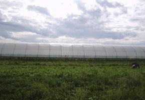 Folii polietilena pentru agricultura