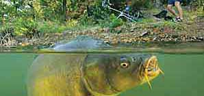 Articole pescuit la crap