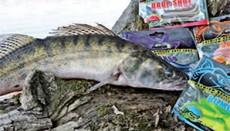 Articole pescuit la rapitor