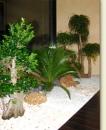 Plante interior Bucuresti