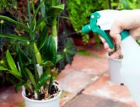 Intretinere plante exterior