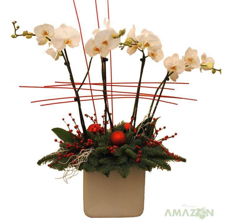 Aranjament Xmas Phalaenopsis