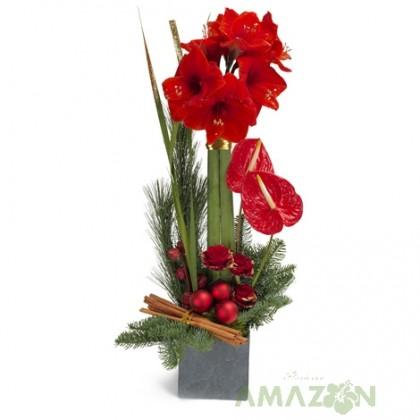 Aranjament floral Xmas Amarilis