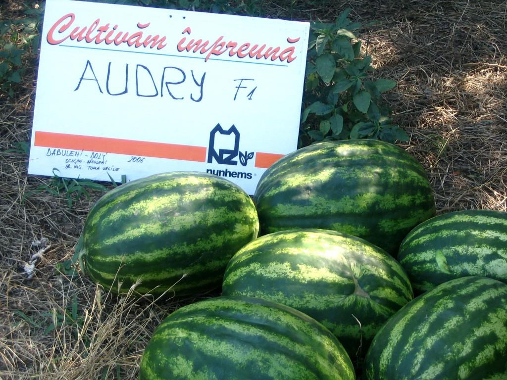 Seminte pepeni verzi Audry