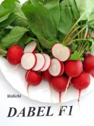 Seminte ridichi Dabel