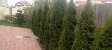 Amenajari plante ornamentale