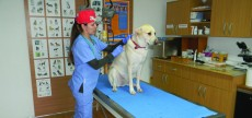 Vaccinari animale