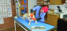 Tratamente stomatologice animale