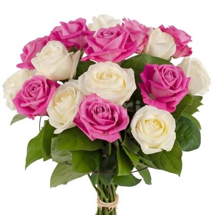 Trandafiri bicolori albi si roz-ciclam