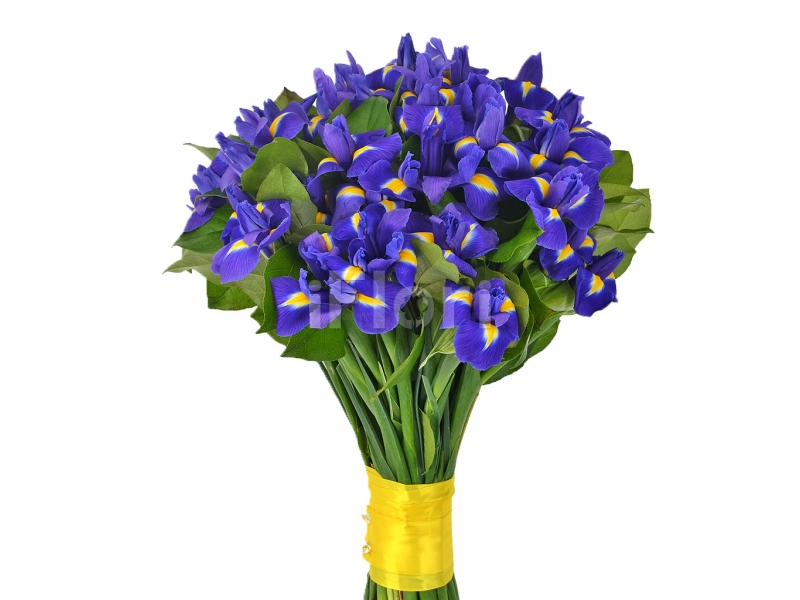 Flori Sfantul Dumitru