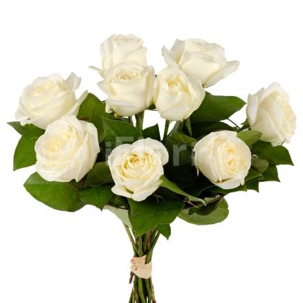 Trandafiri albi 9 fire