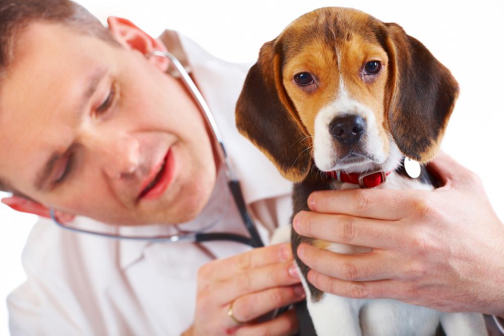 Aparatura medicala de uz veterinar
