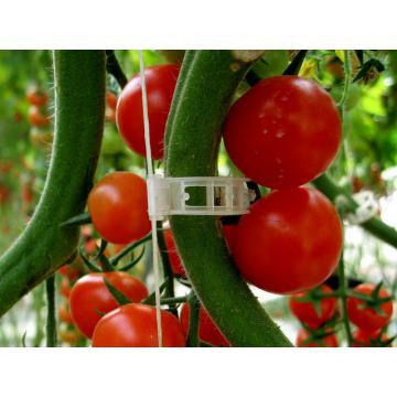 Clipsuri pentru suport tulpina tomate
