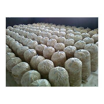 Compost pleurotus pentru producatori