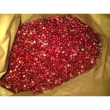 Afine rosii, merisoare Vaccinium vitis-idaea