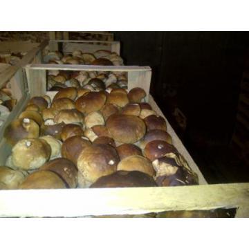Hribi proaspeti (funghi freschi) Boletus Edulis
