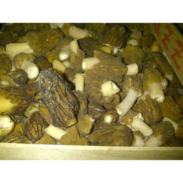 Zbarciogi, ciuperci de padure
