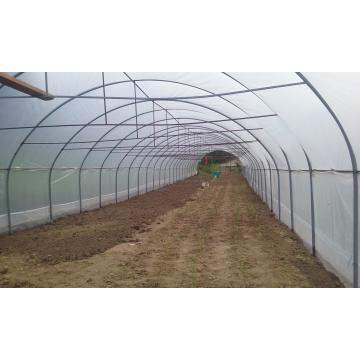 Solarii legume cu pereti verticali