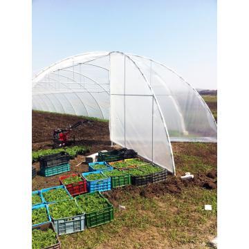 Solarii pentru legume - ventilatii pe capete si lateral