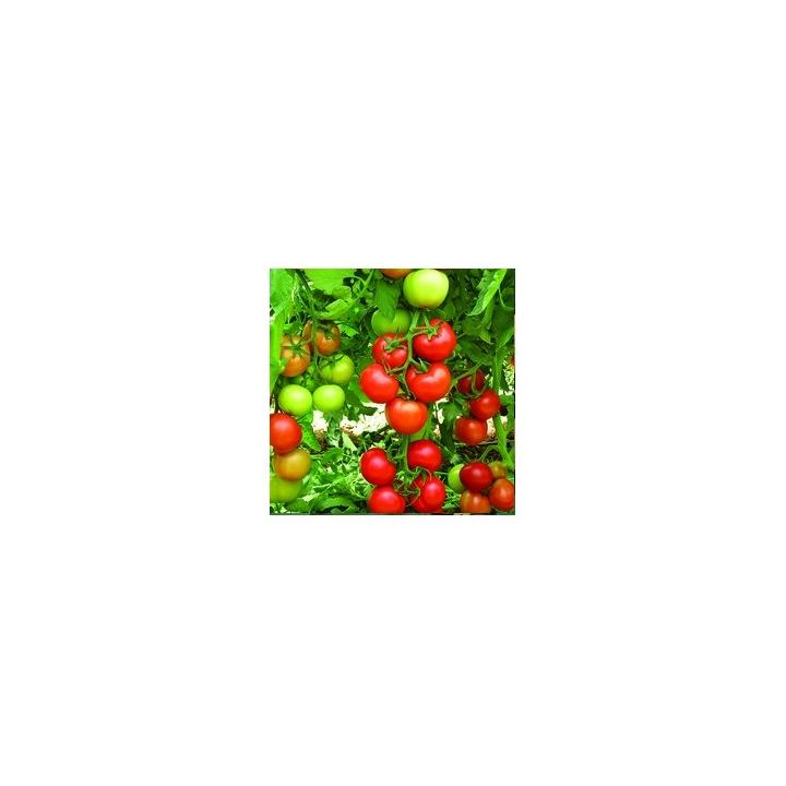 Seminte de tomate Antalya Rn F1