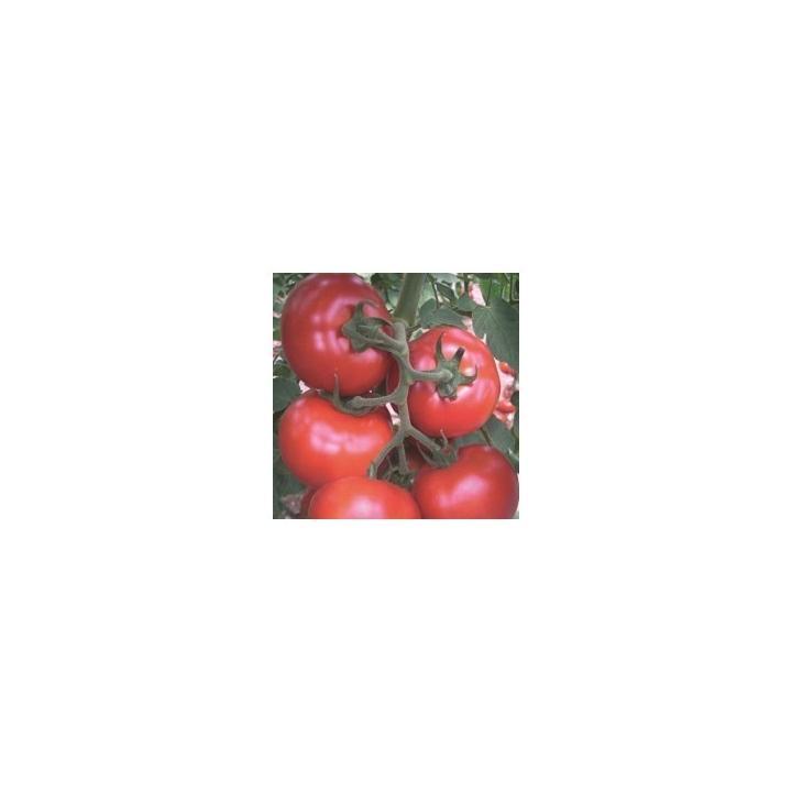 Seminte de tomate Gonul F1