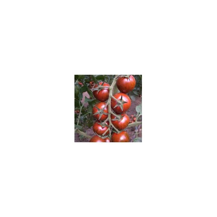 Seminte de tomate Tiger F1