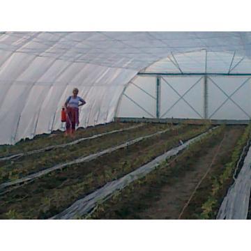 Solar legume/ flori 8 x 30 m la cheie