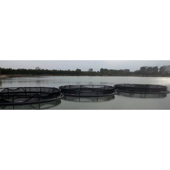 Ferma piscicola in sistem viviere