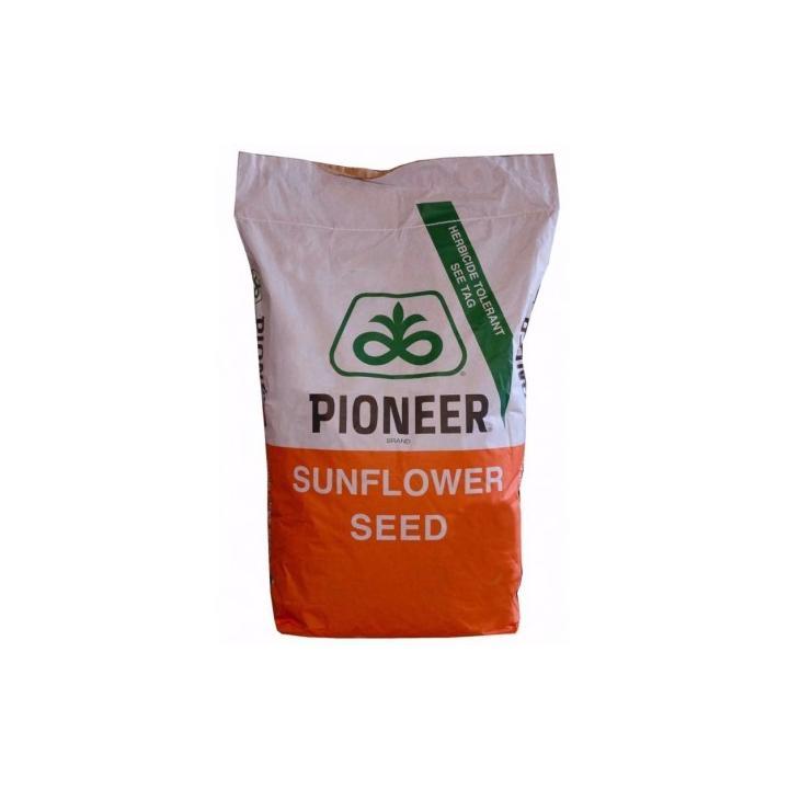 Samanta floarea soarelui Pioneer P64LE99