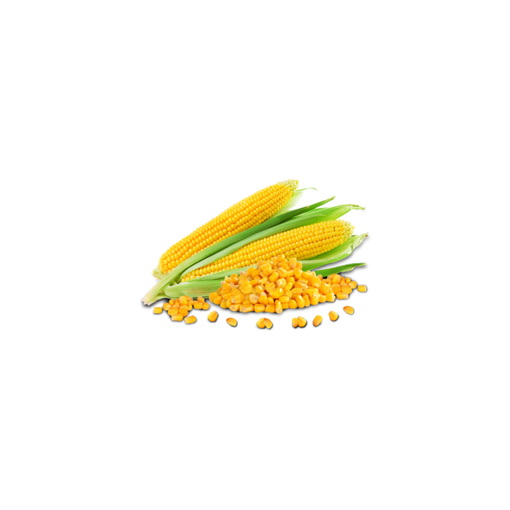 Seminte porumb zaharat Deliciosul