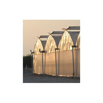 Folie profesionala pentru sere si solarii Sotrafa