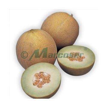 Seminte de pepene galben Lavigal F1