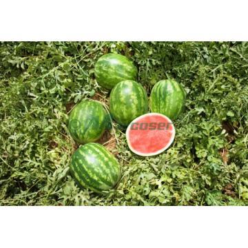 Seminte de pepene verde Crimson Sweet Raci