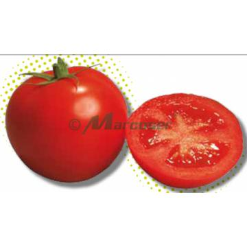 Seminte de tomate nedeterminate Izmir F1, 500 seminte