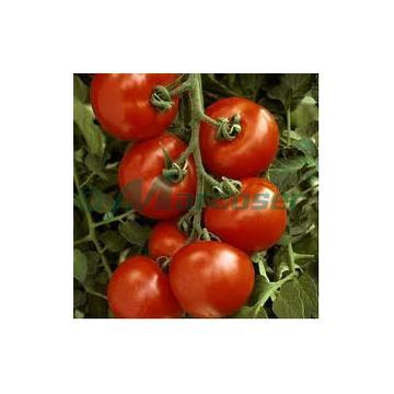 Seminte tomate Menhir