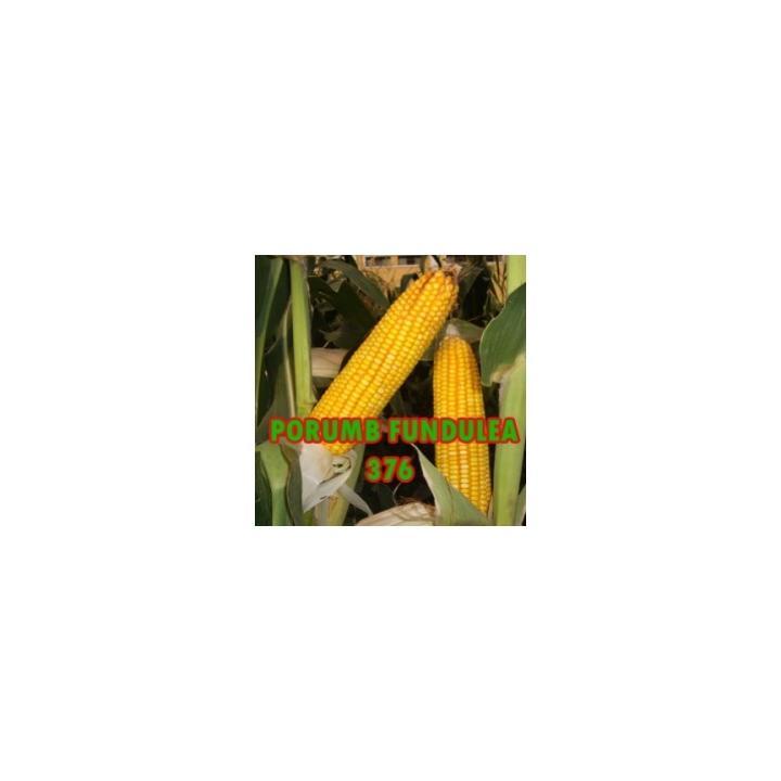 Seminte de porumb Fundulea 376 (25.000 seminte = 1 pogon)