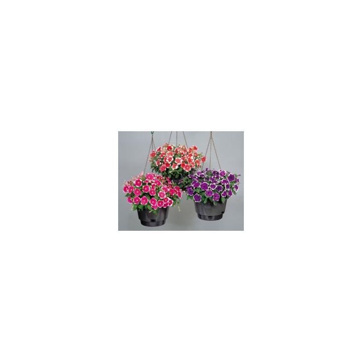 Seminte flori Petunia Multiflora Merlin F1, 1000 drajeuri