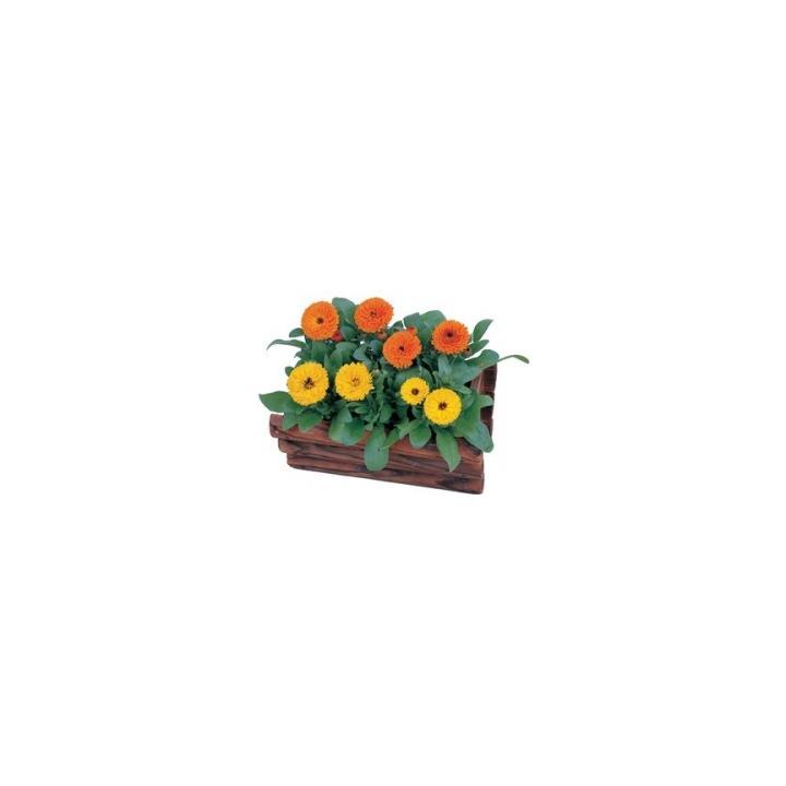 Seminte de flori Calendula Officinalis Nana Calypso