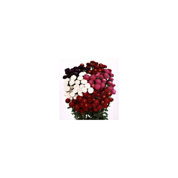 Seminte de flori Callistephus Chinensis Bonita, 2500 seminte