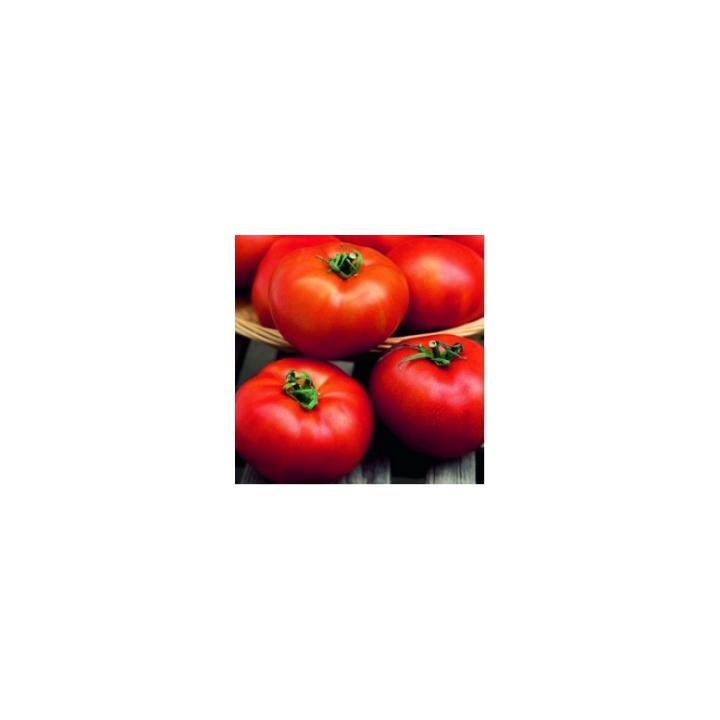 Seminte de tomate Hector F1 (1000 sem)
