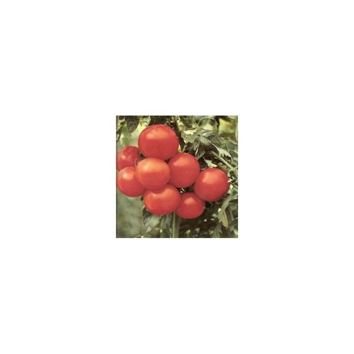 Seminte de tomate Margarita F1, 500 sem