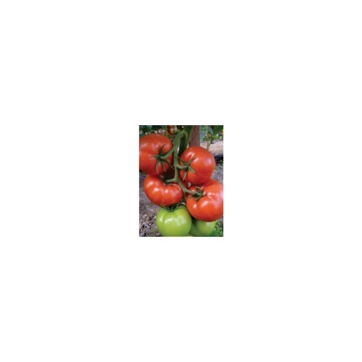 Seminte de tomate Panekra F1 (500 sem)